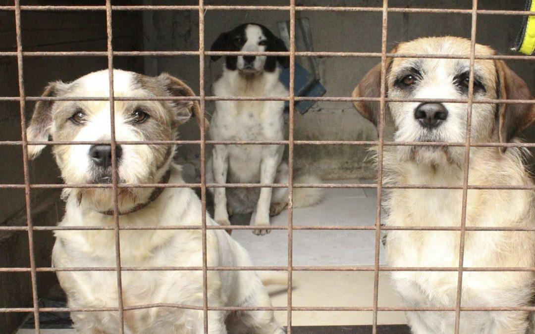 Los concellos se ven incapaces de cumplir la ley de protección animal
