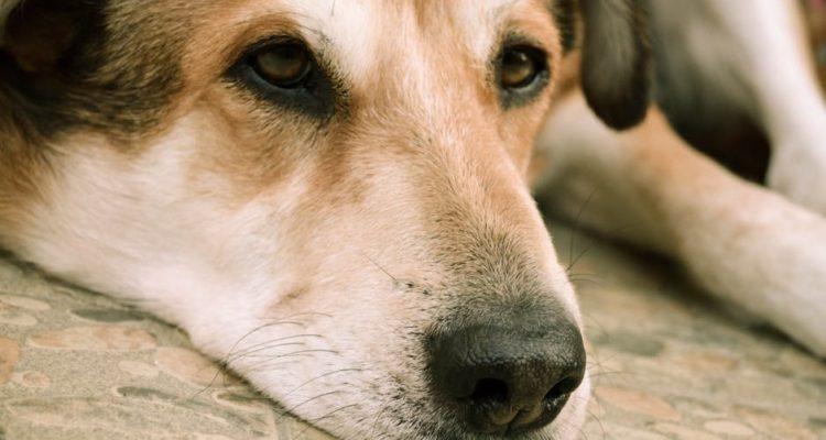 Veterinarios revelan lo último que hacen las mascotas antes de morir y es desgarrador