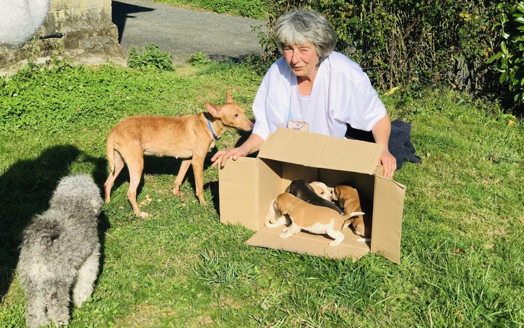 Una campaña facilitará en el concello arzuano la esterilización de veintiocho canes