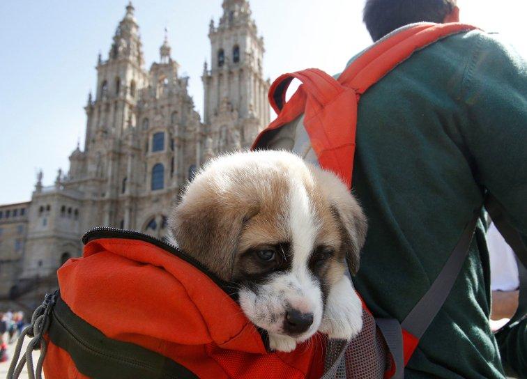 """Perros abandonados y """"perregrinos"""""""