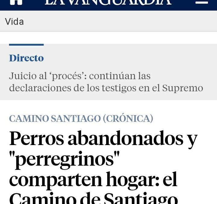 """Perros abandonados y """"perregrinos"""" comparten hogar: el Camino de Santiago"""