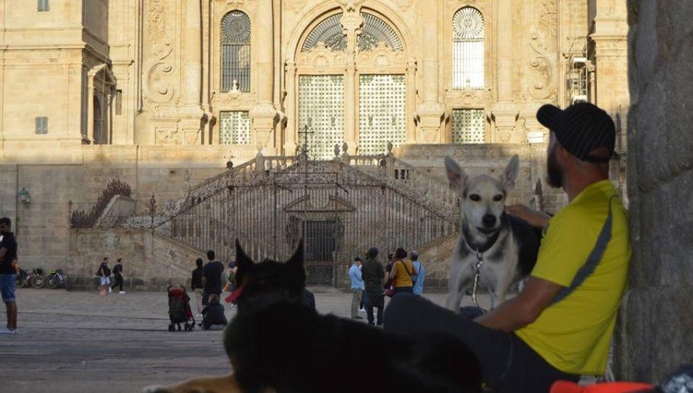 Perros abandonados y 'perregrinos' comparten hogar hogar durante el Camino de Santiago