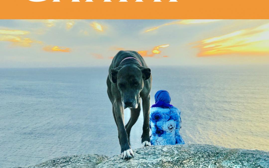 GALICIA: Albergues dogfriendly en el Camino // GALICIA: Dogfriendly hostels on the Way