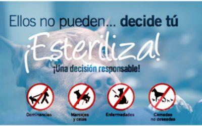 Campaña de Esterilización 2021 no Camiño de Santiago